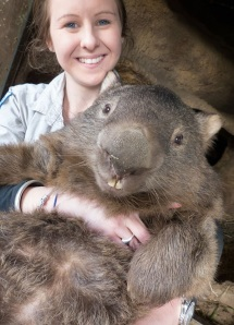 Patrick the giant Wombat