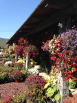 Roadside Market near Ticonderoga