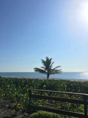 Beautiful views in Boca